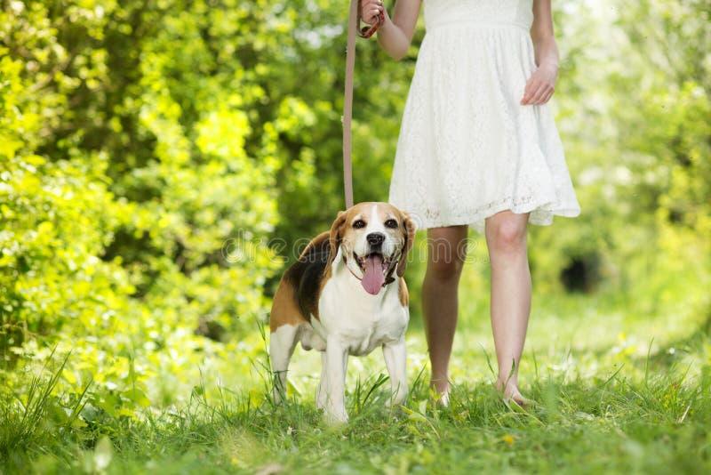 Femme avec le chien photos libres de droits