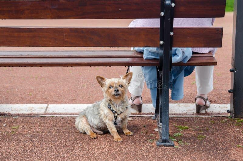 Femme avec le petit chien se reposant sur le banc photo libre de droits