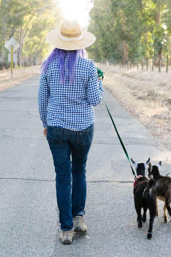 Femme avec les chèvres de marche de cheveux pourpres sur la route de campagne photo libre de droits