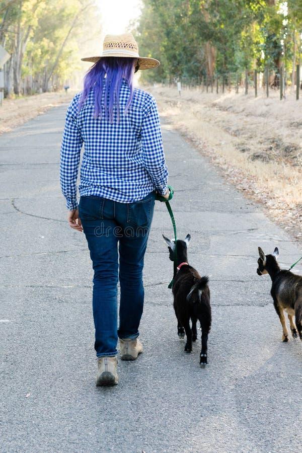 Femme avec les chèvres de marche de cheveux pourpres sur la route de campagne image libre de droits