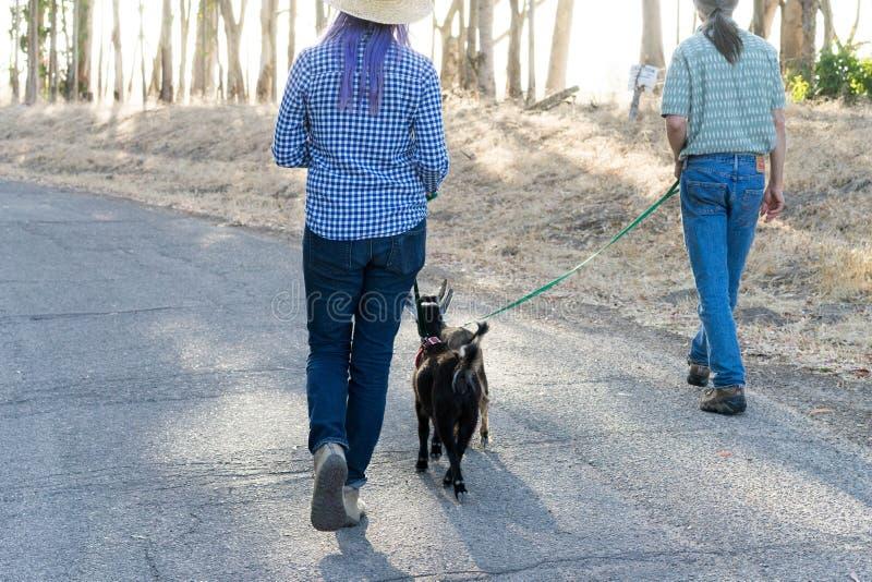 Femme avec les chèvres de marche pourpres de cheveux et d'homme sur la route de campagne image libre de droits