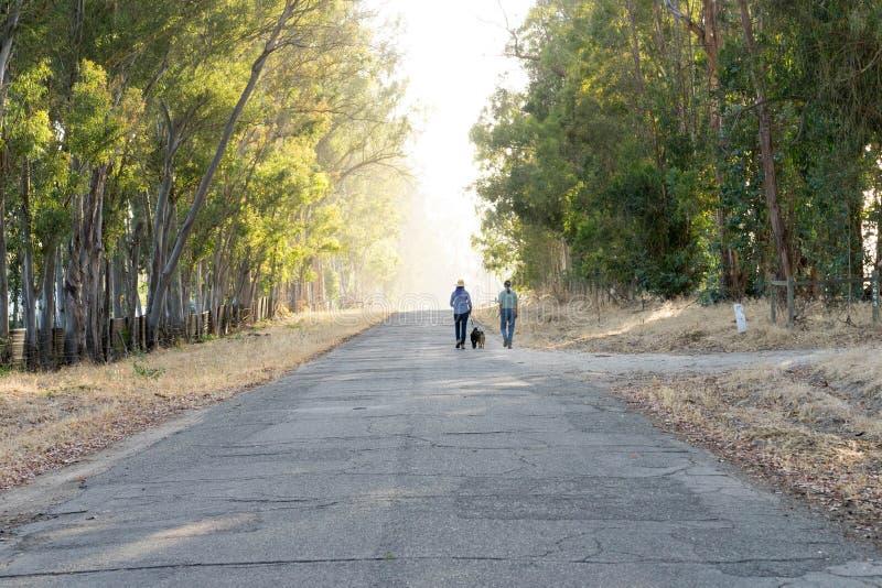Femme avec les chèvres de marche pourpres de cheveux et d'homme sur la route de campagne photographie stock libre de droits