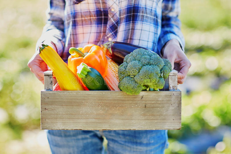 Femme avec les légumes organiques frais de la ferme photographie stock