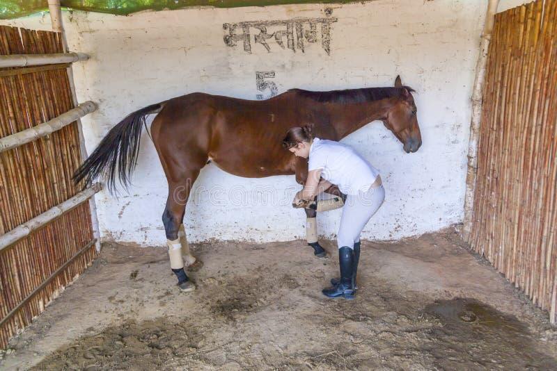Femme avec son cheval nettoyant le sabot image stock