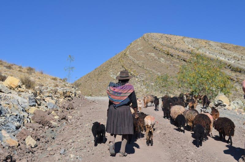 Femme bolivienne avec des chèvres dans les montagnes photo libre de droits