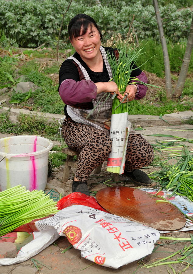 Pengzhou, Chine : Femme de sourire empaquetant l'ail images libres de droits