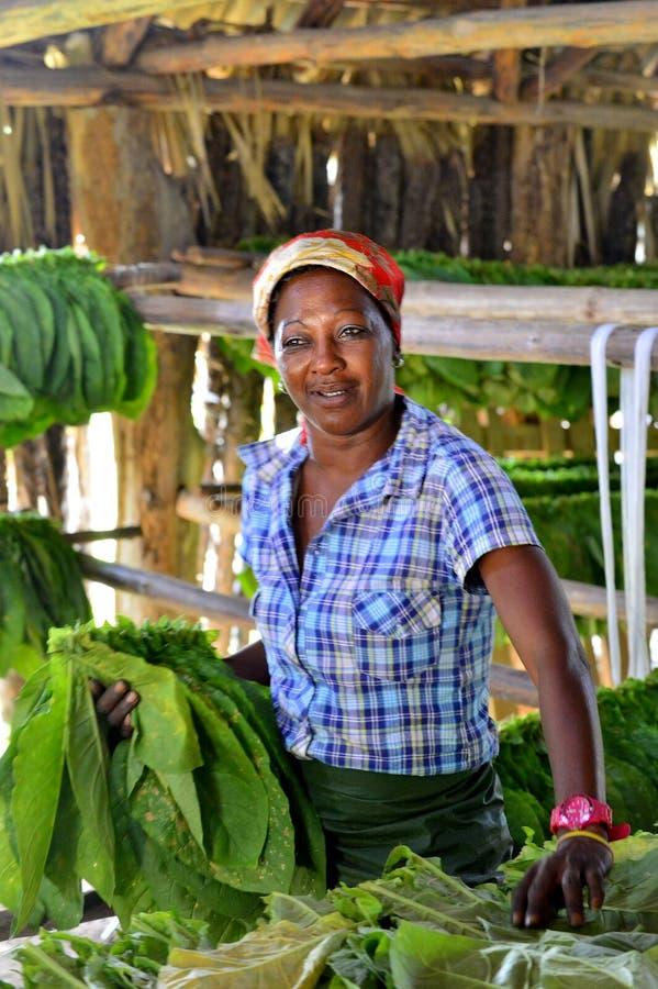 Femme cubaine travaillant dans une usine de cigares photographie stock