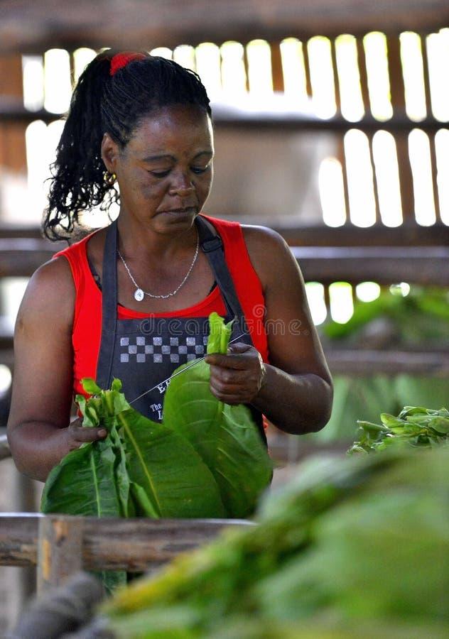 Femme cubaine travaillant dans une usine de cigares images stock