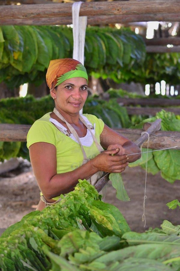 Femme cubaine travaillant dans une usine de cigares image stock