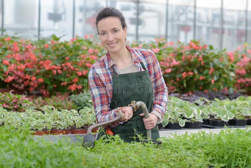 Femme d'agriculteur avec l'outil de jardinage fonctionnant en serre chaude de jardin photos stock