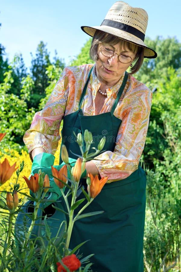 Femme d'une cinquantaine d'années arrosant ses fleurs photographie stock
