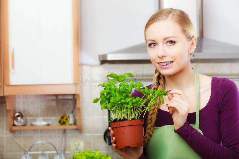 Femme dans la cuisine avec le basilic frais vert dans le pot photo libre de droits