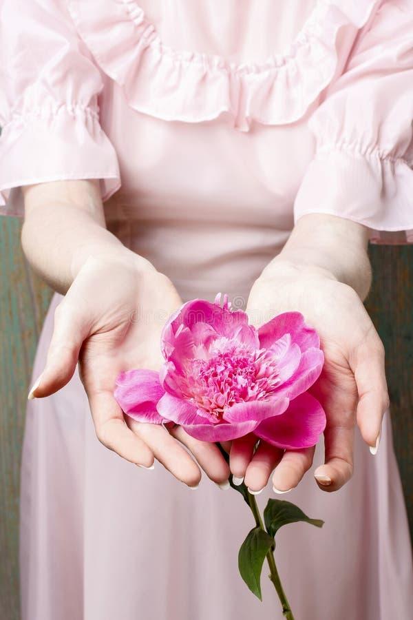 Femme dans la robe rose tenant la pivoine rose renversante photos stock