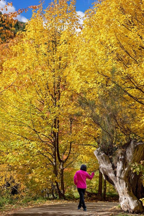 Femme dans la veste rose lumineuse posant en Front Of Tree Trunk Amongst Autumn Leaves photo stock