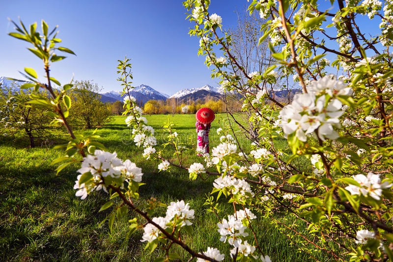 Femme dans le costume rouge aux fleurs de cerisier photographie stock