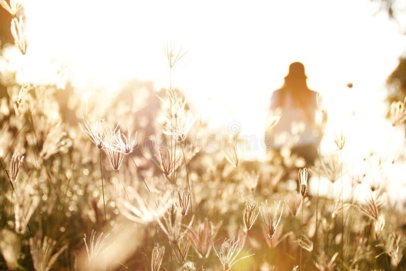 Femme dans le domaine de l'herbe pendant le coucher du soleil images libres de droits