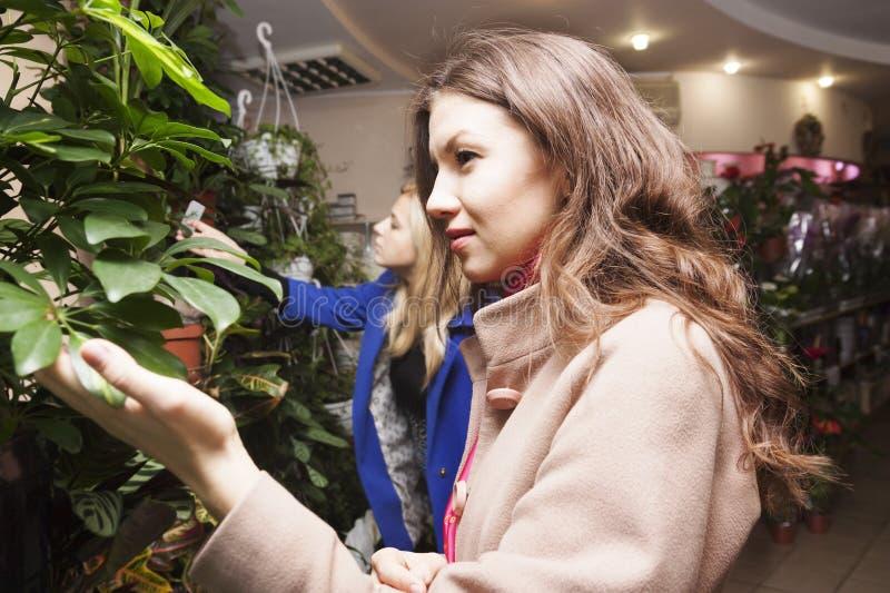 Femme dans un fleuriste photographie stock
