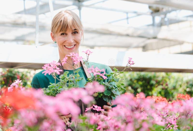 Femme de jardinier en sa serre chaude avec des fleurs ? vendre photo stock