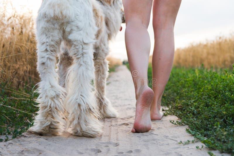 Femme de jour d'été avec un chien image libre de droits