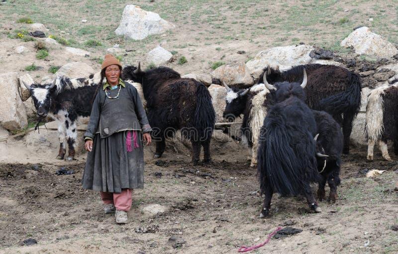 Femme de Ladakhi avec des yaks image libre de droits