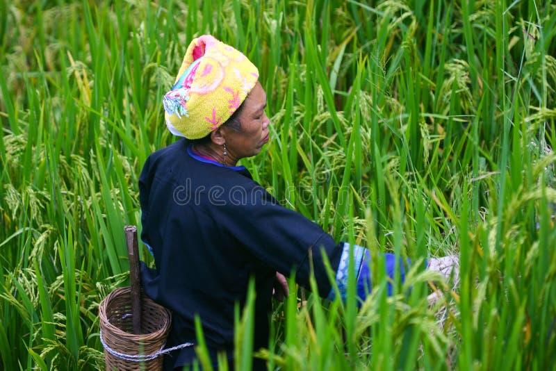 Femme de minorité, Yunnan photos libres de droits