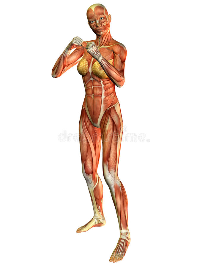 Femme de muscle dans la position de bataille illustration stock