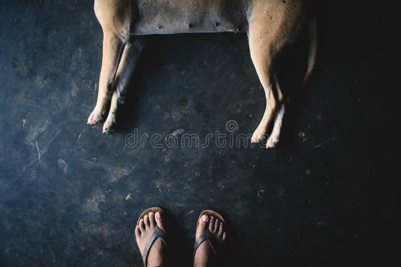 Femme de pieds de vue supérieure avec le chien photos libres de droits