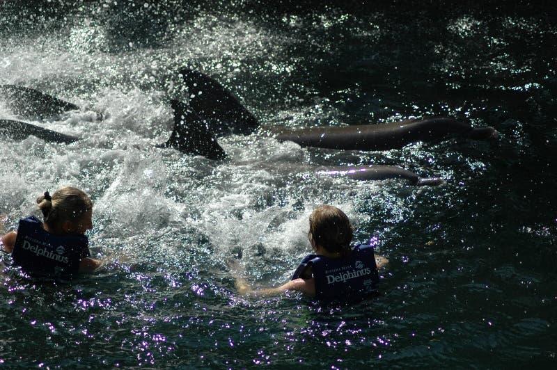Femme deux avec deux dauphins au Mexique photographie stock libre de droits