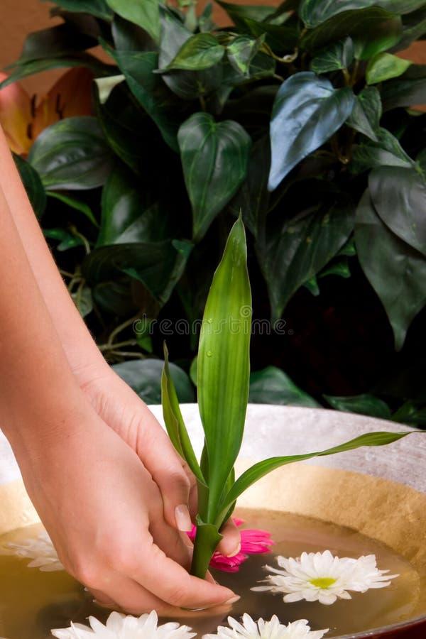 Download Femme En Bambou De Fixation Image stock - Image du clou, doigt: 8665633