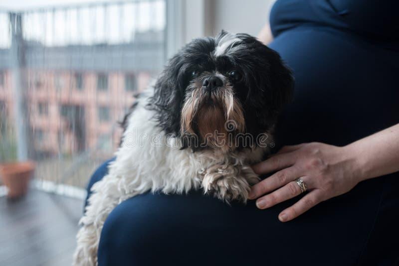 Femme enceinte avec son chien à la maison photo libre de droits