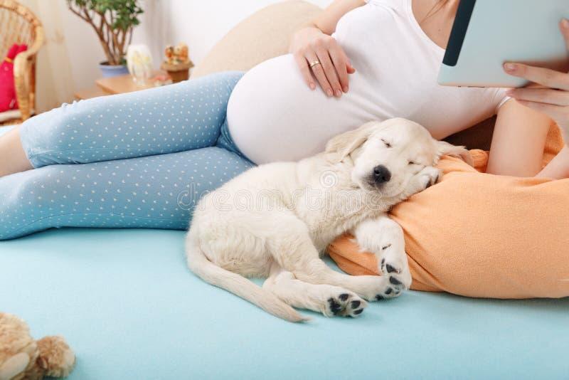 Femme enceinte avec son chien à la maison image libre de droits