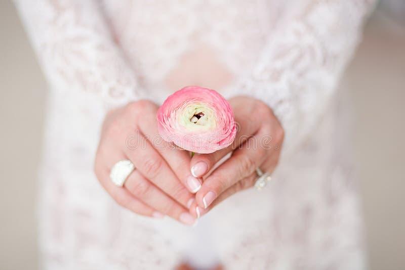 Femme enceinte tenant la fleur de ranunculus au-dessus du ventre photos stock