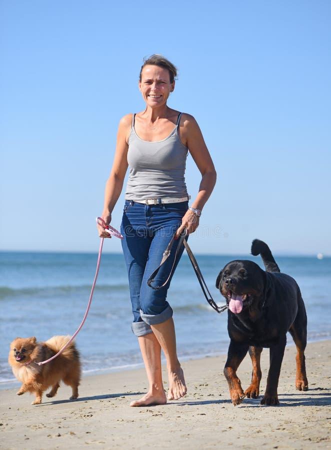 Femme et chiens sur la plage photos libres de droits