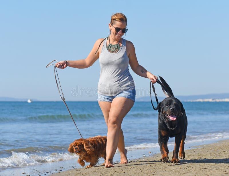 Femme et chiens sur la plage photographie stock libre de droits