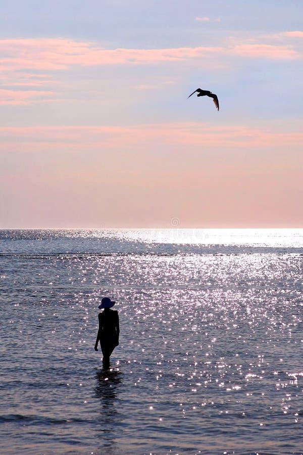 Femme et mouette sur le coucher du soleil image stock
