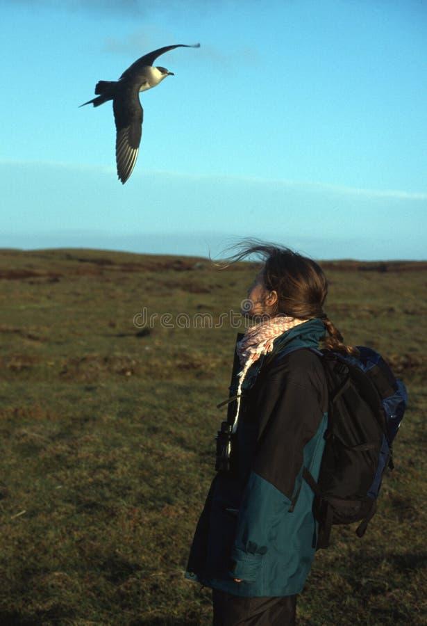Femme Et Oiseau Marin Images stock