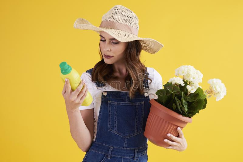 Femme examinant la qualité de l'engrais pour la fleur photos stock