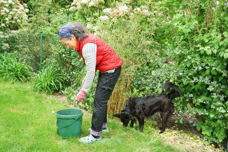 Femme faisant du jardinage avec des amis de compagnon d'équipe de chien de border collie photos stock