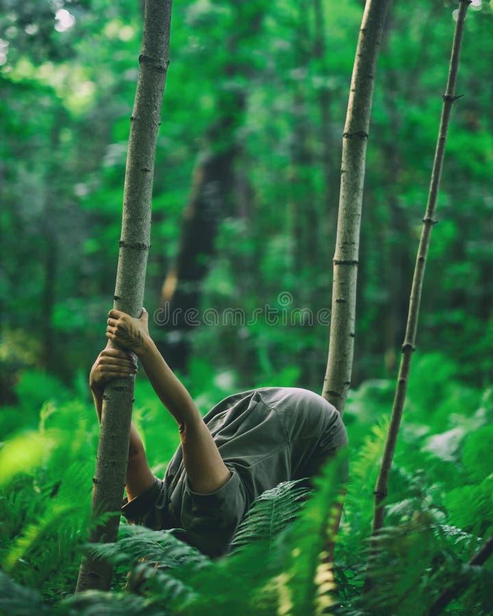 Femme faisant le yoga dans le recourbement de forêt images stock