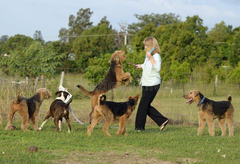 Femme heureuse ayant l'amusement jouant des bulles avec ses chiens photo libre de droits