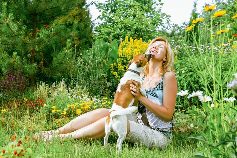 Femme jouant avec un chien photo stock