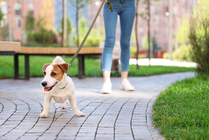 Femme marchant avec le chien adorable de Jack Terrier dehors photos stock