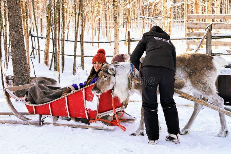 Femme mettant le traîneau sur le renne dans la forêt d'hiver dans Rovaniemi image stock