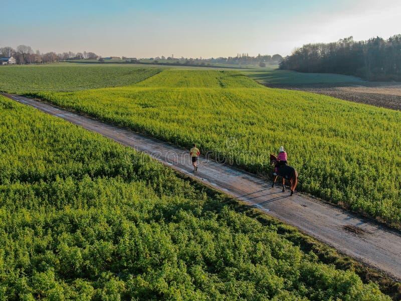 Femme montant un cheval sur une petite route entourée par les terres cultivables vertes image libre de droits