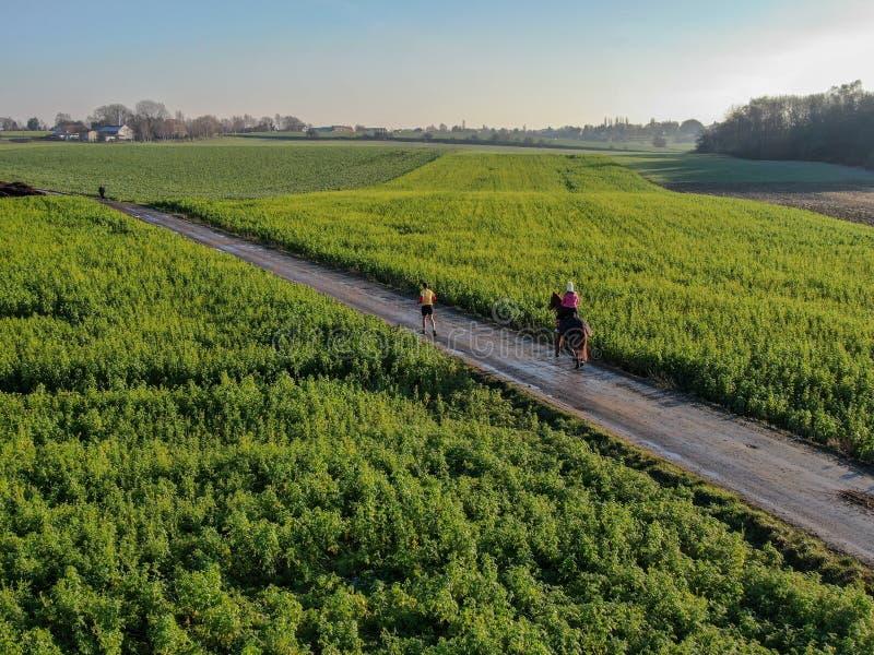 Femme montant un cheval sur une petite route entourée par les terres cultivables vertes photos stock