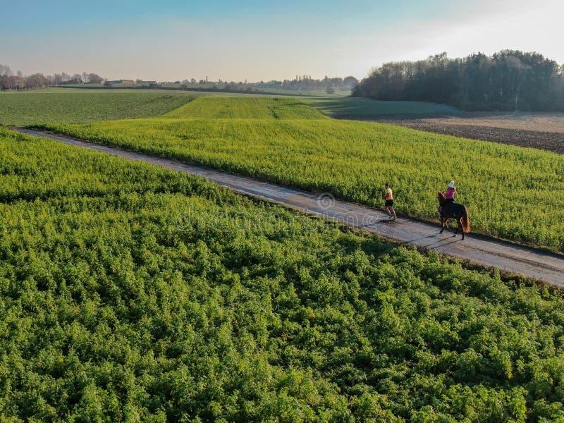 Femme montant un cheval sur une petite route entourée par les terres cultivables vertes images libres de droits
