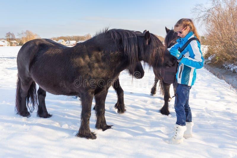 Femme néerlandaise choyant le cheval noir de frisian dans la neige photos libres de droits