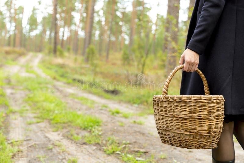 Femme rassemblant des champignons dans la forêt paisible foncée, évasion de la ville, récolte de champignon images stock