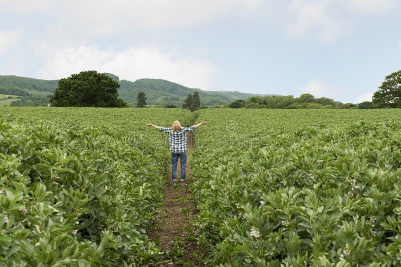 Femme recherchant avec les bras tendus au milieu de la plantation photos stock