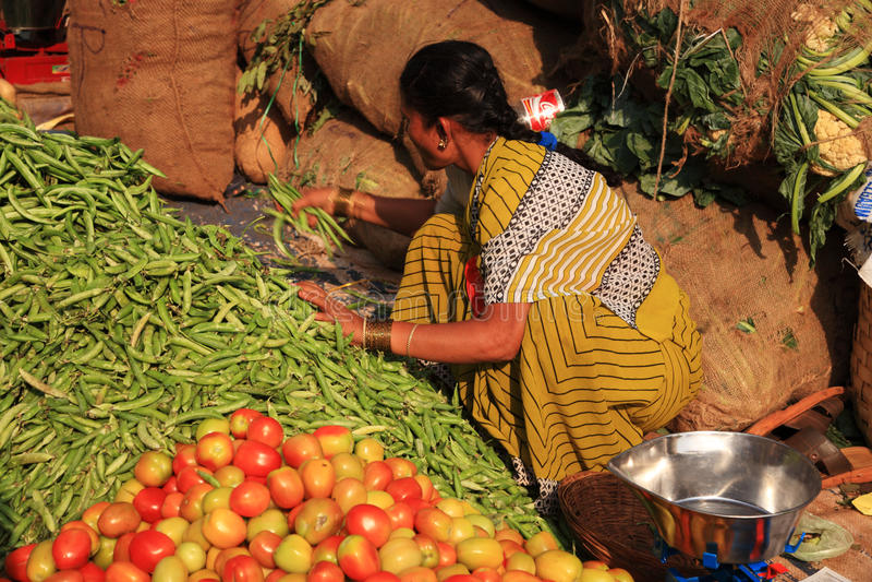 Femme recueillant le marché en plein air indien d'haricots verts images stock